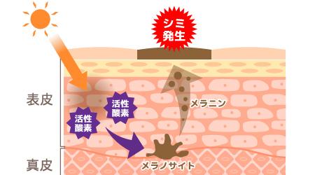 after-summer-care_450x250-kasseisanso.jpg